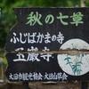 玉厳寺に紫陽花の写真を撮影に行ってきた!