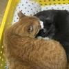 猫の鼻腔内リンパ腫㉑  猫同士の複雑な関係