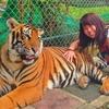 【場所・行き方まとめ】タイガーキングダムで虎と触れ合ってきた話。タイ・チェンマイを全力で楽しむ!