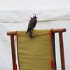 金沢城公園~冬のおもてなし~ 鷹匠と鷹たちに魅了されました
