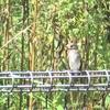 『冬鳥』 散歩中に出会える生き物たち エゾビタキ