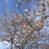 【虹始見】 日本道観総本部 2017年4月15日