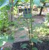家庭菜園 5月30日 収獲