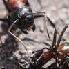 アリを眺めていると癒やされます
