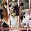 韓国最大の食用犬市場が「閉鎖」 それでも犬食は続けられる