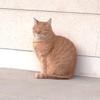 生國魂神社(いくたまさん)で出会ったねこさん  ~あなたが招き猫では?~