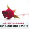 浜崎あゆみさんの経過図「セミヨッド考察」