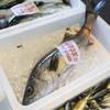 2017年7月18日 小浜漁港 お魚情報