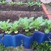 【家庭菜園】小カブを収穫しました
