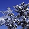 ちょっとスッキリ雪の朝 11月30日
