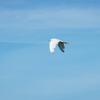 ホットドックプレスっぽい「鶴の恩返し」