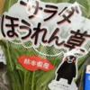 Oisixおためし野菜で作ってみた(3)くまモンサラダほうれん草でホットサラダを作りたかった