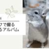 【チンチラ】たろまるアルバム~2021.5月版~