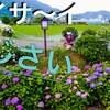 4K 神奈川『開成町あじさい祭り』ドローン 空撮