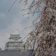 もう一度行きたい桜の名所【姫路城】(前編)
