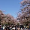 葉桜混じりでした。3月最終日に上野公園に花見に行ってみた。(上野公園)