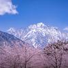 劔岳を望むパノラマと桜