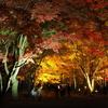 秋色をさがして 香雪園…