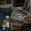 あんころもちときなこもちは私とママの間で眠ります