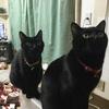 多頭飼いのお家から来た2匹の仔猫