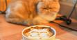 神奈川でおすすめしたい猫カフェ5選!ひとときの癒しを横浜で!