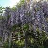 【和歌山】藤の花の名所。行基が開いたお寺、子安地蔵寺(橋本市・御朱印)