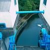 【写真】スナップショット(2017/10/14)鴨川ダムその2