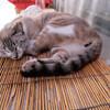 那覇:牧志公設市場あたりで、朝寝するネコ