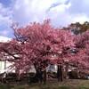 花は桜木、人は武士