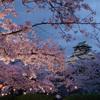 【大阪】桜の名所の宝庫🌸鶴見緑地と毛馬~天満橋エリア