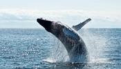 荻上チキSession特集「日本一クジラを解剖した海獣学者に聞く!海の哺乳類の死体が教えてくれることとは?」が面白かった