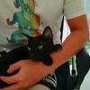 【猫ブログ】自宅で皮下点滴10日目。一日点滴サボったら調子悪い?