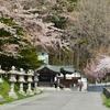 桜めぐり開始は函館八幡宮から…