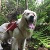 迷子の犬を探すのに大切な4つのこと