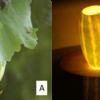 宮沢賢治の『銀河鉄道の夜』-ケンタウル祭の植物と黄金と紅色で彩られたリンゴ(3)