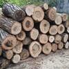 薪ストーブ始生代110 コナラの薪割り~コナラとくぬぎの違いについて