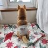 犬の簡単腹巻きの作り方。古着のリメイク編。