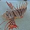 多魚種な日本海で「五目エサ釣り」を楽しんできました~👍 【 オリジナルの胴付き仕掛けを試用👆 】