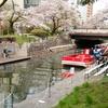桜2017 at 兼六園・金沢城・松川