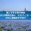 美しすぎる青の絨毯、ひたち海浜公園の『ネモフィラ』はGWに超絶おすすめ!