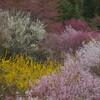 今春はGWが見納め!山じゅうが春色に染まる桃源郷「 花見山」
