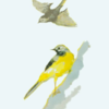 鳥 セキレイ 水彩
