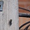 【カナダの虫】セミを激写。虫捕り網が超可愛いのでお土産にした