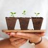 子育て中のわたしの癒し☆お部屋に観葉植物を置いてみよう!