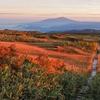 朝日に染まる月山弥陀ヶ原湿原