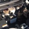 久しぶりに車に乗ったらエンジンルームに子猫7匹いたというツイートが話題に!ボンネットバンバンも効かず、投稿者も苦笑いwww