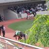 新潟芝2000m(2歳戦)種牡馬別ランキング