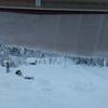 屋根から落ちる雪。