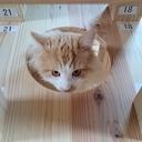 週末居酒屋 猫の宿