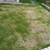芝刈り後に固形肥料と液肥